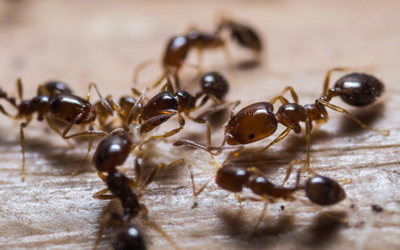 3-Homely-Activities-That-Give-Rise-To-Ant-Problems